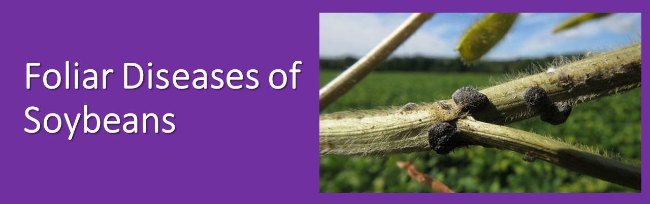 IPM for Foliar Diseases of Soybeans