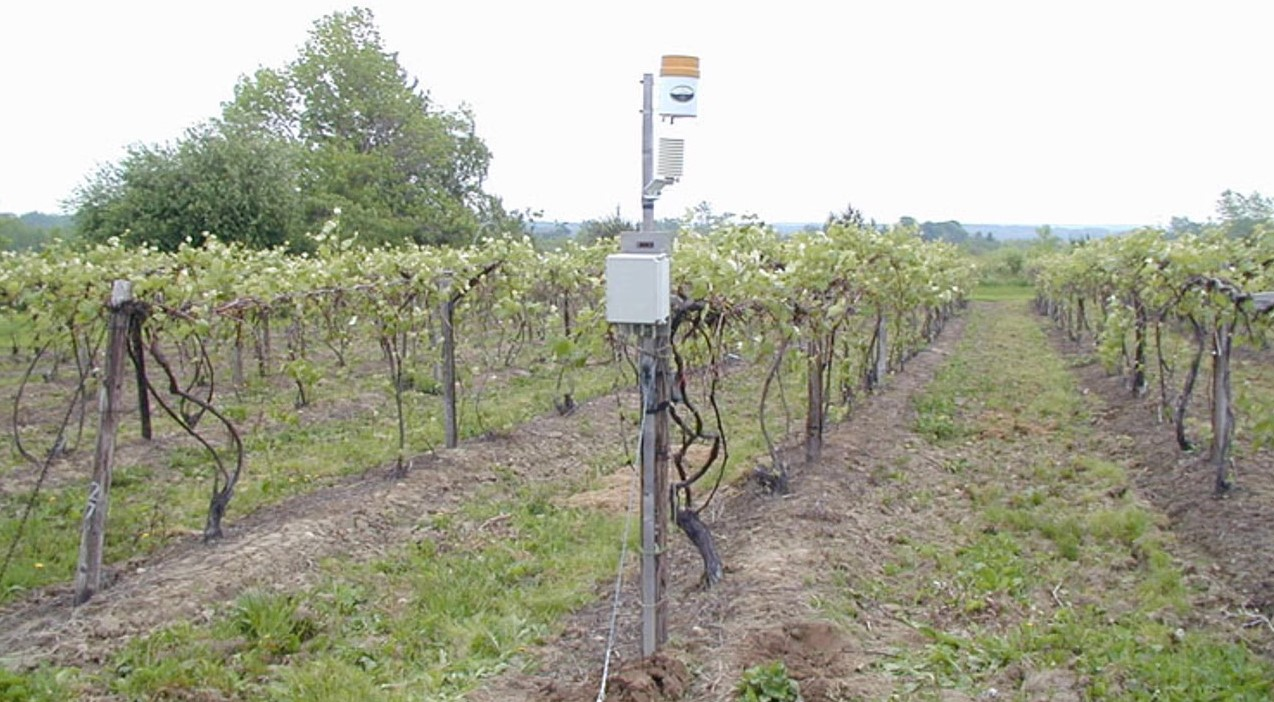 Implementing NEWA into a Vineyard IPM Strategy (1 credit in NY)